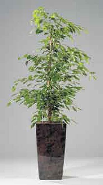 hydrokultur b ropflanzen raumbegr nung zimmerpflanzen. Black Bedroom Furniture Sets. Home Design Ideas