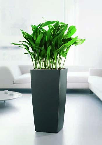Hydrokultur Buropflanzen Raumbegrunung Zimmerpflanzen